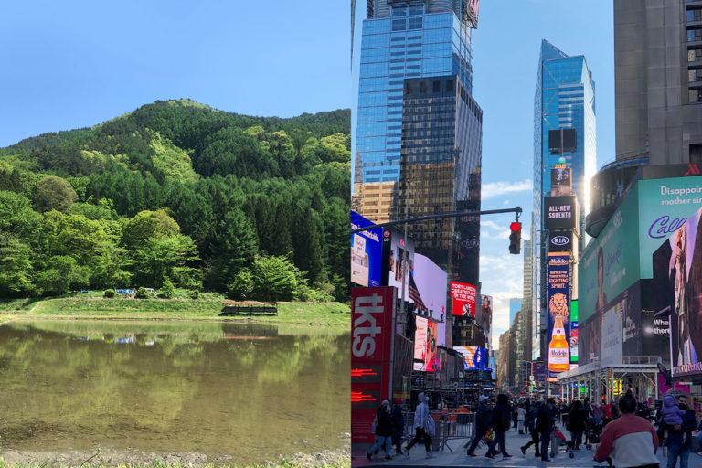 地方と都市、住むならどちらを選びますか?